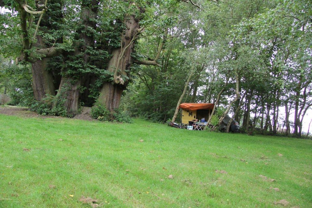 """Campen neben dem größten noch """"lebenden"""" Baum in England."""