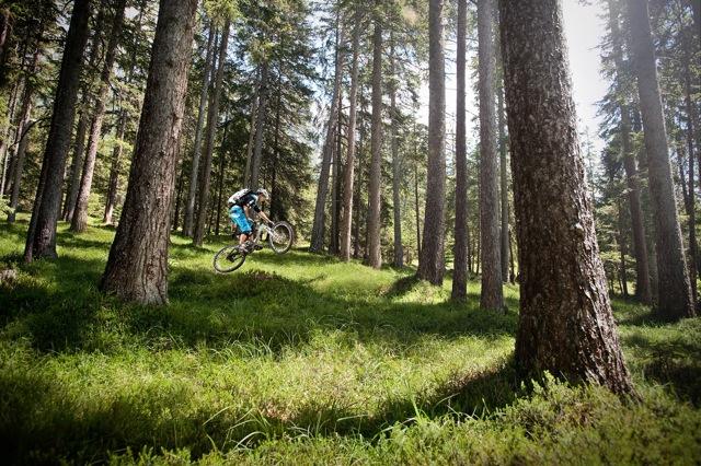 Ich persönlich liebe diese Wälder - im Sommer und im Winter