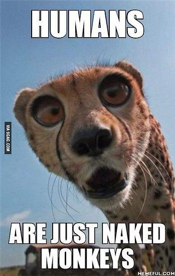 Sudden clarity clarance cheetah