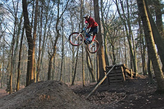 Nutbush Forest - Guido Line