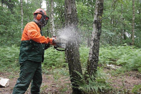 Bäume werden gefällt