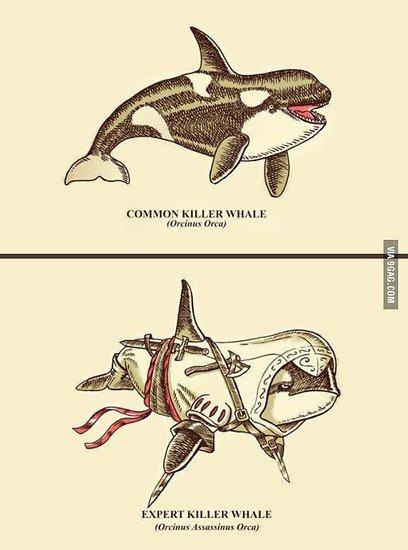 Killerwal