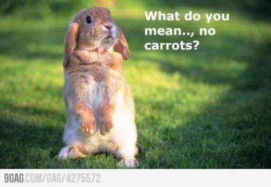 no carrots 2