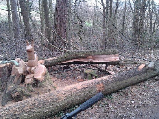 Armer Baum 2