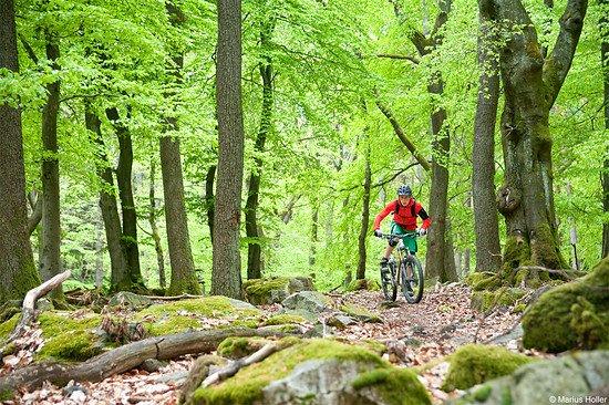 schöner Trail und tolle Landschaft im Taunus
