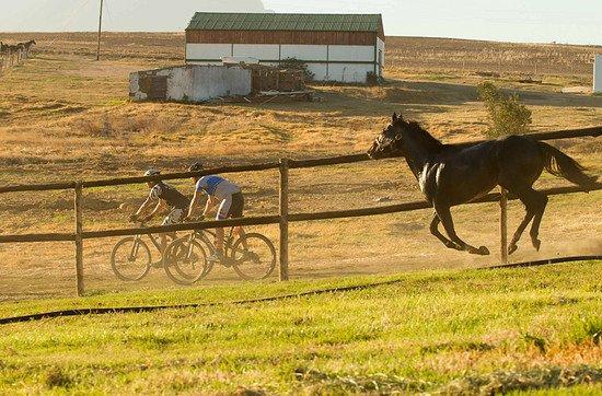 Wettrennen! - Greg Beadle-Cape Epic-SPORTZPICS
