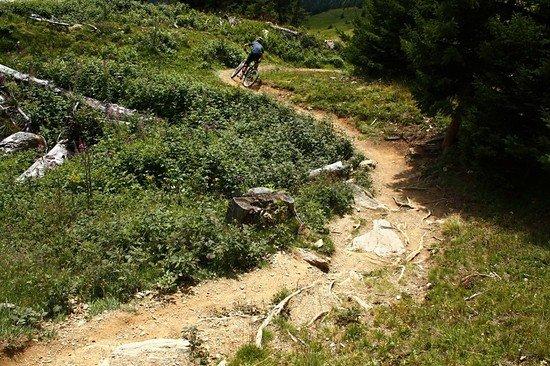 Murmli-Trail