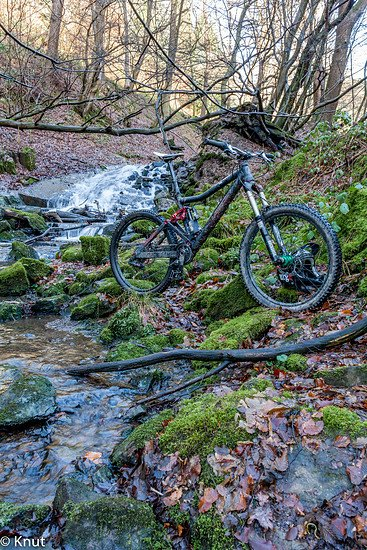 Wald Fahrrad Kopie