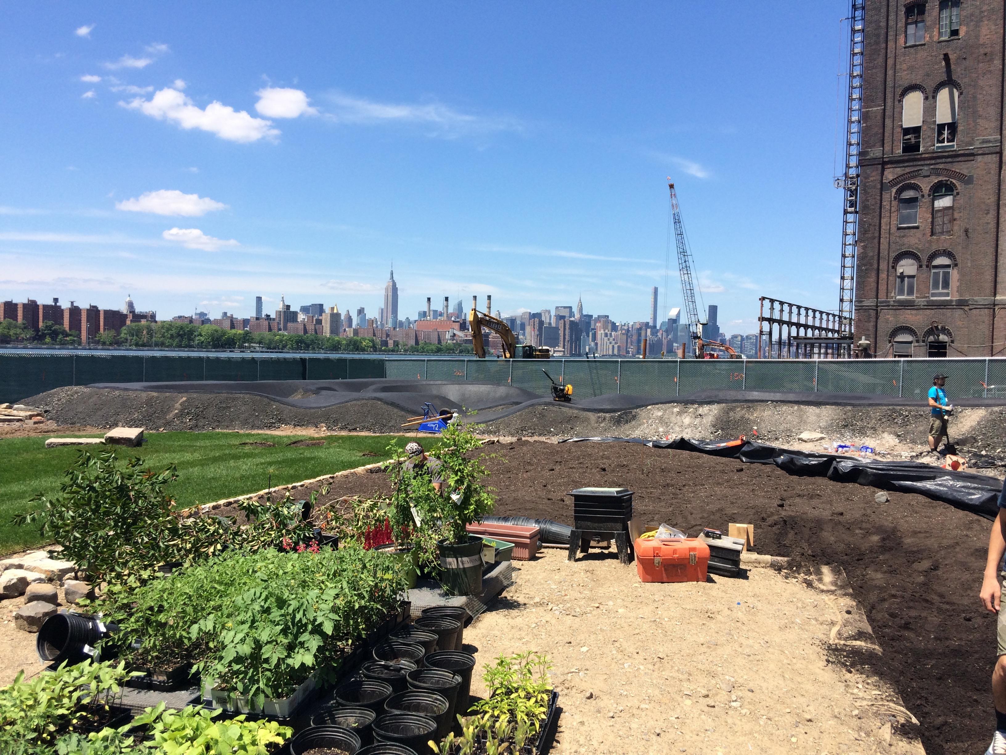 foto: brooklyn farms wird hier eigenes gemüse anpflanz…