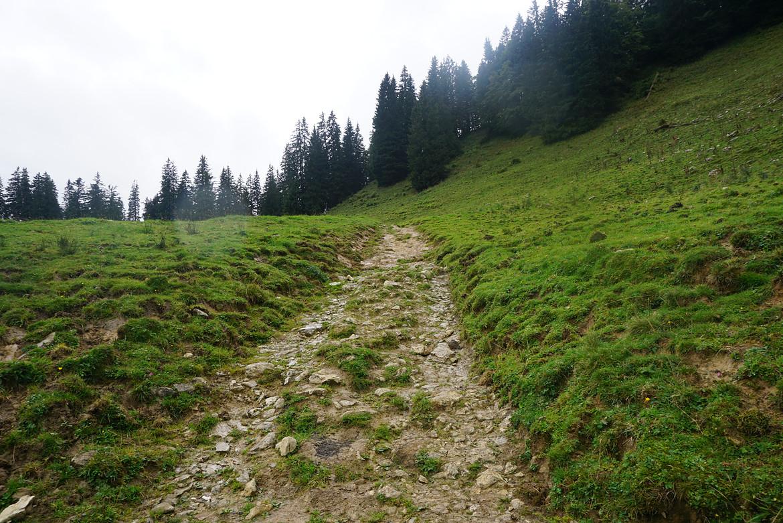 Mtb tur Tegernsee singletrail