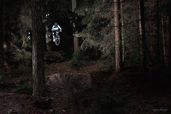 Im Unterholz...