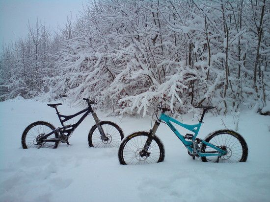 Spezis im Schnee