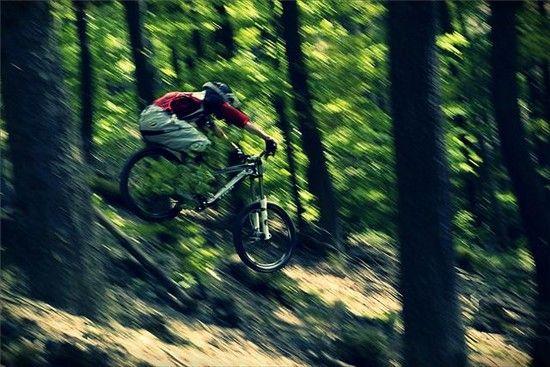 ein Session flog im Walde
