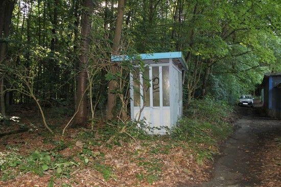 bushalteimwald