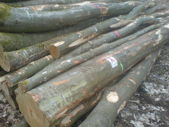 bei der Holzmacherei geht grade so mancher Wanderweg drauf