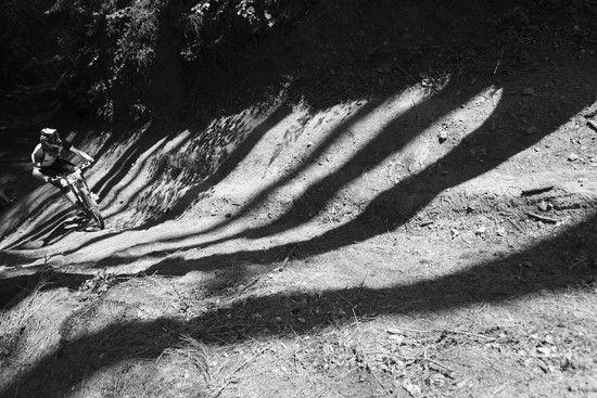 Automn Shadow