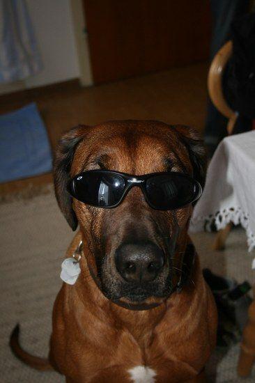 coolerhund