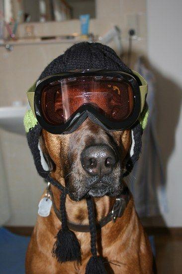 skihund