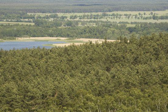 Verlandungszone Köthener See
