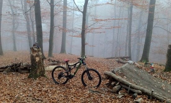Blur im Wald