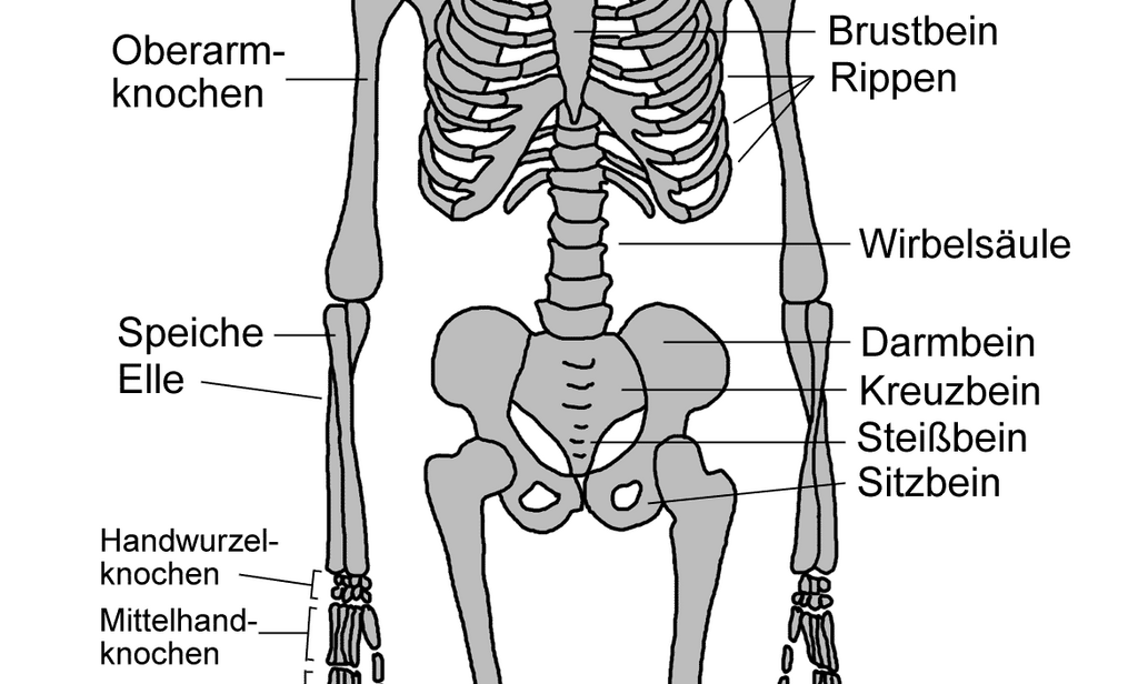 Beste Skelett Der Menschlichen Anatomie Bilder - Anatomie und ...