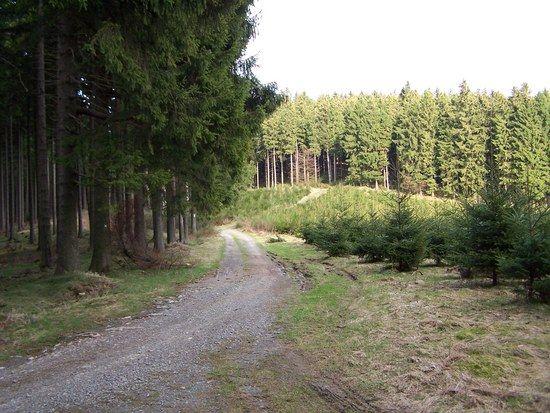Weg von Plettenberg Brenge richtung Wiehardt