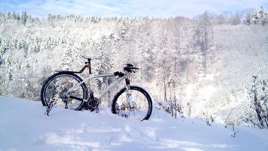 Schneewolf 2