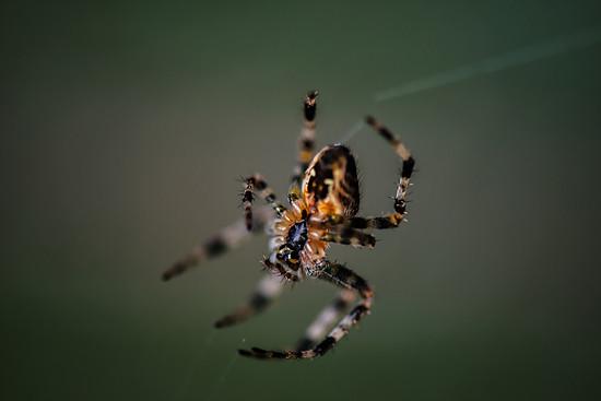 Spinnen (1)