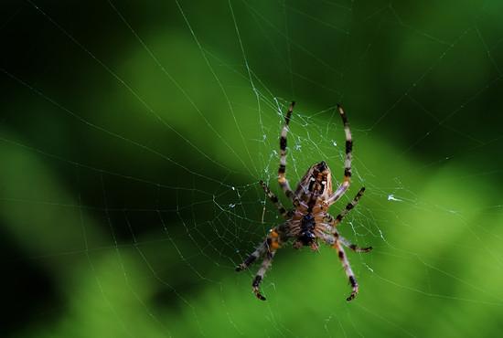Spinnen (2)