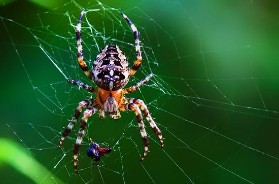 Spinnen (3)