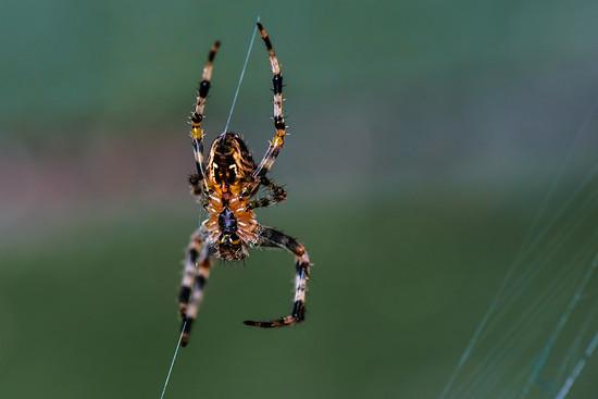 Spinnen (4)