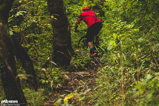 Abtauchen bei der ausgedehnten Trailsuche