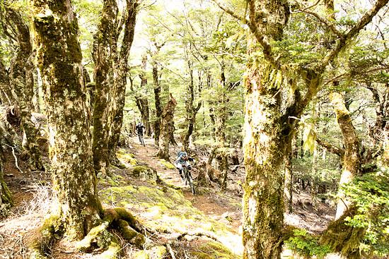 Von hier ging es auf einem zunächst extrem schnellen Trail bergab