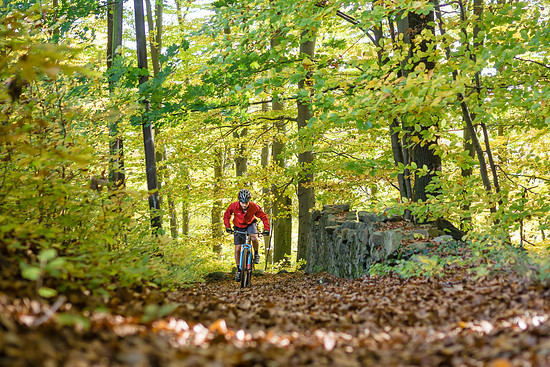 Herbststimmung in Radebeul