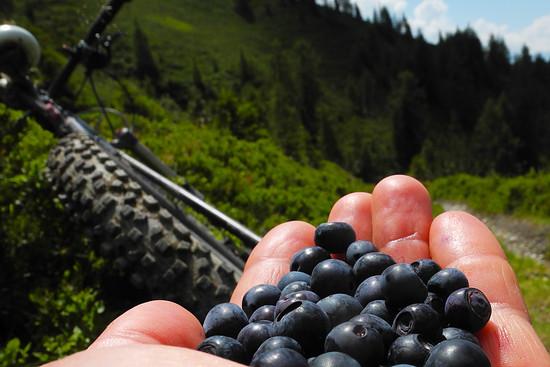 blueberrytrail