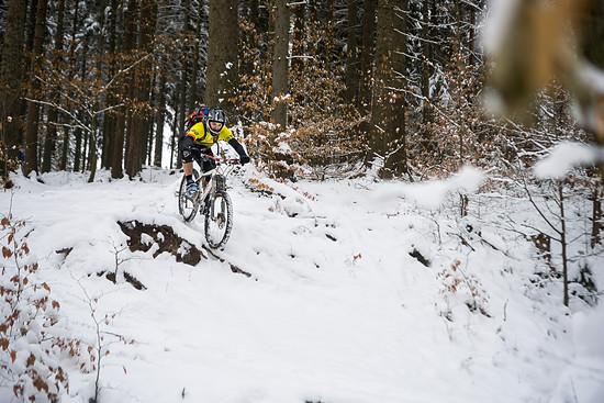 Wurzelsuche im Schnee
