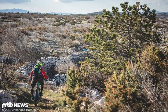 Knorrige Landschaft, anstrengendes Trail-Finale in der Ebene