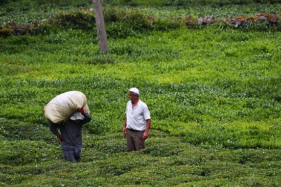 Teebauern - überall gibt es Teeplantagen, überall werden wir eingeladen. Das gefällt.