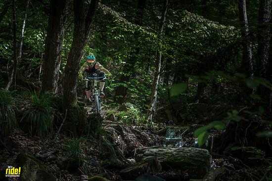 Robert im Wald
