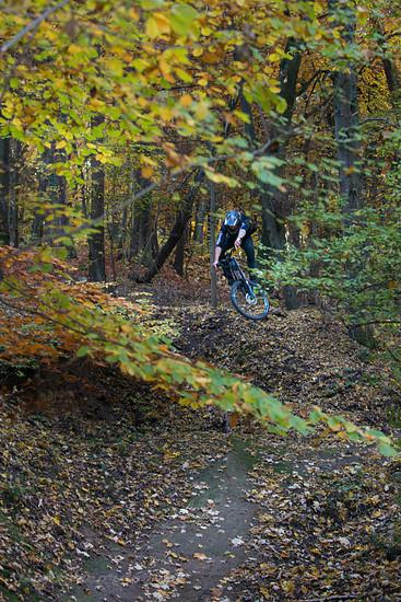 Gap im Herbst...