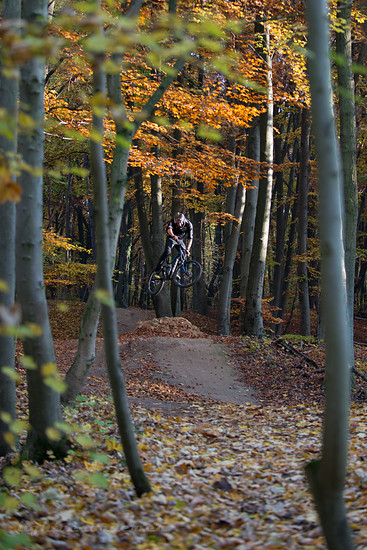 im Wald....