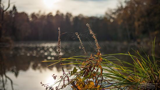 151108-Herbst 002