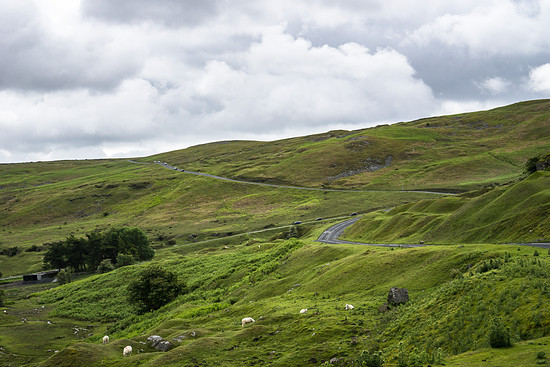Brecon Beacons - sheep grazing road