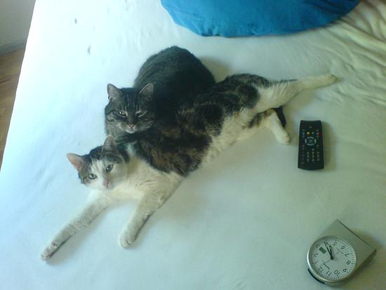 Kurt & Willi