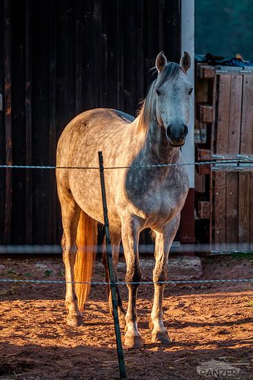 160505 Pferd