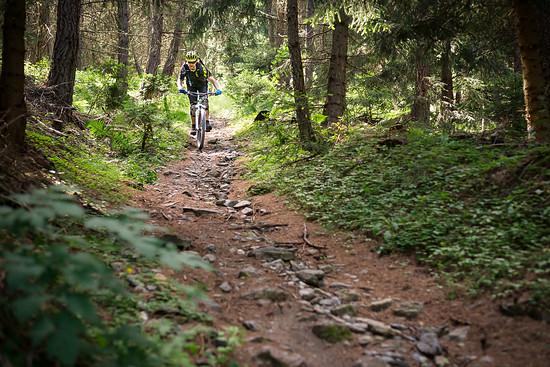 20160717-48L Goldsee Trail
