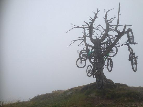 Der Bikebaum