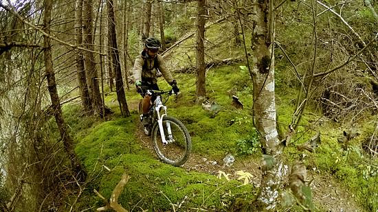 Bäume, Moos und Trail