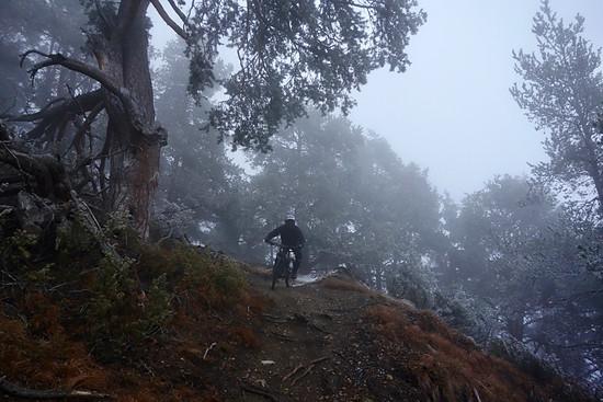 Propain Trail