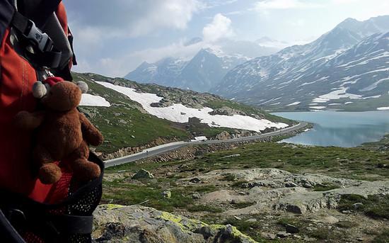 Elch am Gavia Pass